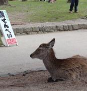 気ままに奈良をPR