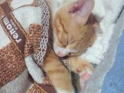 mirumiruの猫活動日記