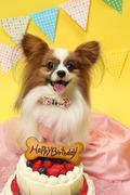 パピヨンパパの愛犬と幸せに暮らすコツ