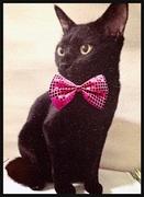 アラサー新妻黒猫の きままに貯蓄&美活♡