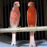 小鳥の自由空間
