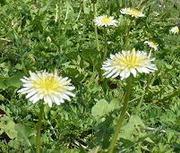 自然の野山に咲く山野草