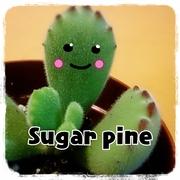 Sugar pineのあなぐら