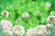 firmament  blossom〜てんくうのはな〜