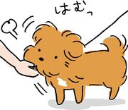 こぐま犬と散歩〜元保護犬の日記〜
