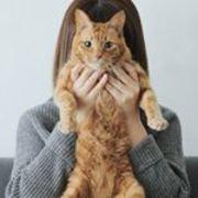 猫4匹と大人のひとり暮らし