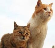 猫の病気と健康をチェックしよう