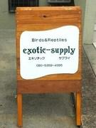 exotic-supply爬虫類