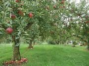 信州・松川町の小さな農園。果樹栽培中。