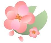 〜タネはなくても花は咲く〜
