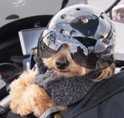 バイク犬、ティナの旅ヽ(^。^)ノ