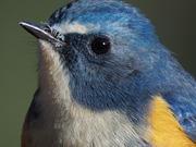八兵衛の野鳥写真日記
