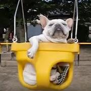 犬のしつけ に役立つブログ