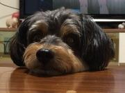旅犬レオの日曜日‼