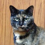 サビ猫ハナのまったり生活