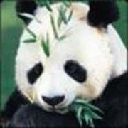 熊猫♂さんのプロフィール