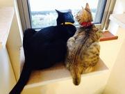 猫と一緒にシンプルライフ