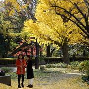 東京で見つけた素敵な女性たちを紹介します