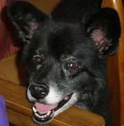 犬の癌、病気と戦う