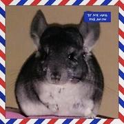 チンチラ梅子のチラチラ♡ブログ