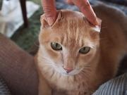数秘相談員ミネコスの部屋(猫好きHSP女子の数秘占い)