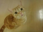 ぬこ。ねこ。あるある〜Funny cats〜