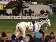 〜馬っぴ〜ルーラーデータ競馬予想