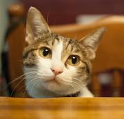 「我が家の猫」
