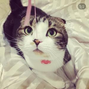 猫のタイ と 山のこと♪