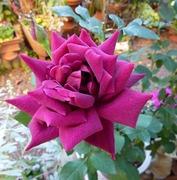 庭の小さな花ばたけ