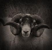 黒顔羊さんのプロフィール