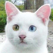 世捨猫のマンドク生活