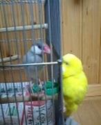小鳥のお宿 りぃふ 〜鳥と私の のんびり日記〜