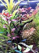 静岡市発 熱帯魚飼育記録