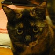サビ猫くぅにゃん♪