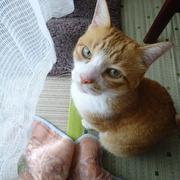 まさかの日記 家と猫と仕事とさんのプロフィール