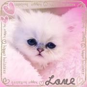 manekinekoの子猫ちゃん日記