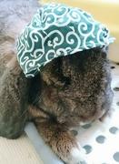 ☆Happy bunny days☆