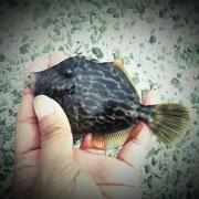 楽しく可愛く釣りできる!釣り女子ブログ