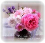 Russian Pink 〜薔薇とピンクと陽だまりと〜