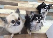 PETDESIGN赤坂けやき通り店のブログ