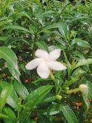 フィリピン珍道中「まーちゃんとブコの木」