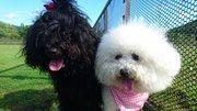 ベスとアリーとしゅーのブログ
