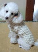 ワンちゃんにやさしいニット服編み物教室