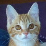 猫と私と生活と~目指すは身も心もスリムなミニマリスト!