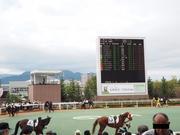 中央競馬パドック診断ブログ
