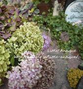 日陰だって狭くったって私の可愛いお庭LittleAntiqueG