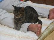 チラシの裏に猫のあしあとさんのプロフィール