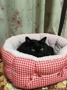 黒猫 〜凜〜