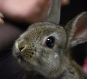 ミニウサギと☆どんぐり日記